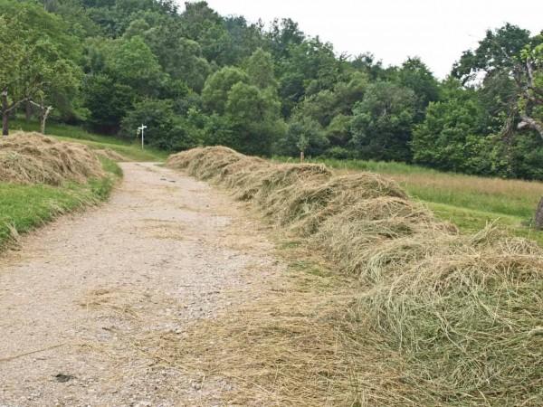 Grünschnitt-Reihen entlang des Panoramawegs