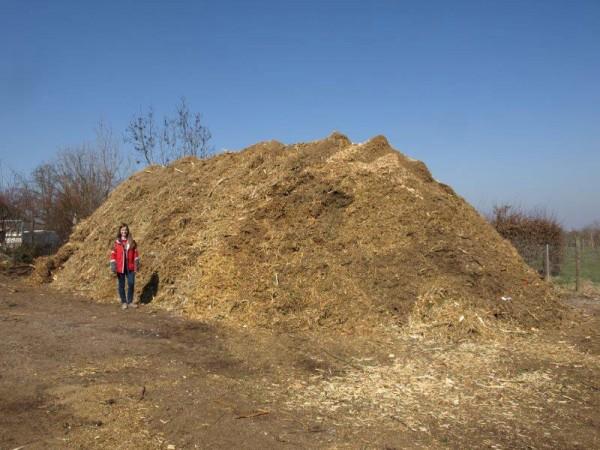 Einer von mehreren zusammengeschredderten Häufen aus Schnittgut, insgesamt kamen über 600 Schüttraummeter Material zusammen.