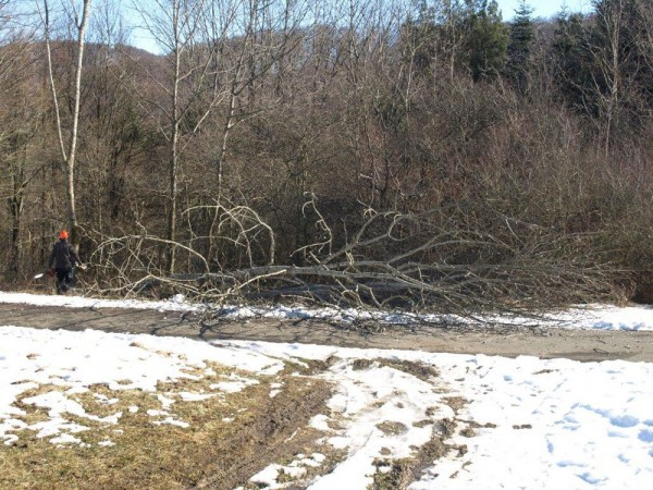 Vereinzelt werden komplette Bäume gefällt.