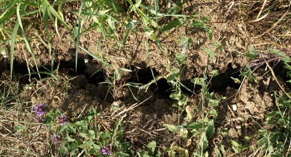 Risse im Boden durch die langanhaltende Trockenheit