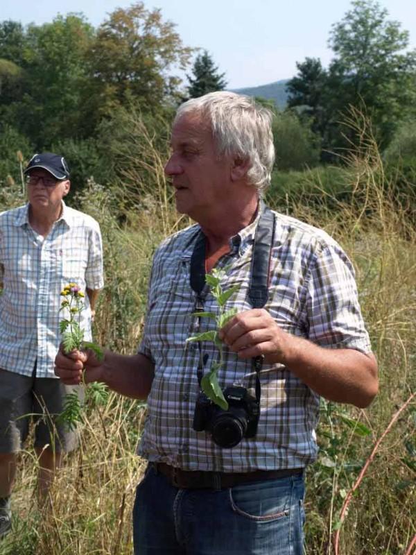 Werner Kuhn erläutert die drei wichtigsten Bestandsbildner des dritten Standjahrs: Rainfarn, Schwarze Flockenblume und Malve, die auch für prägnante Blühaspekte sorgen werden.