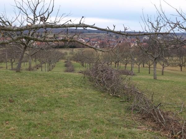 Obstbaumschnittgut