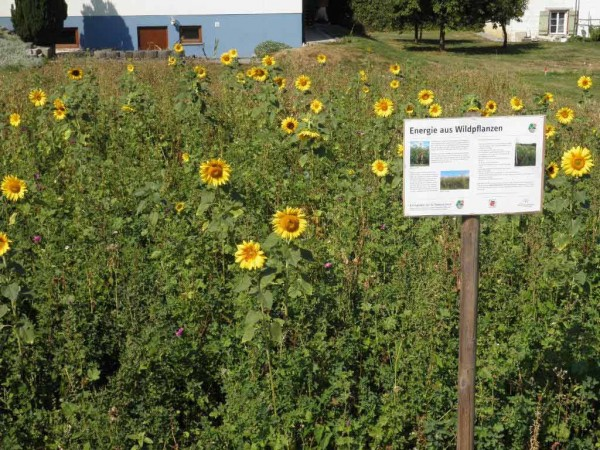 Bei dieser Blüte laden die Informationstafeln zum kurzen Verweilen ein.