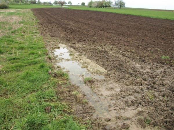 Die zweite Fläche zeigt auch gleich die Schwierigkeiten des Standorts auf: sehr schwere, lehmige Böden die zur Staunässe neigen